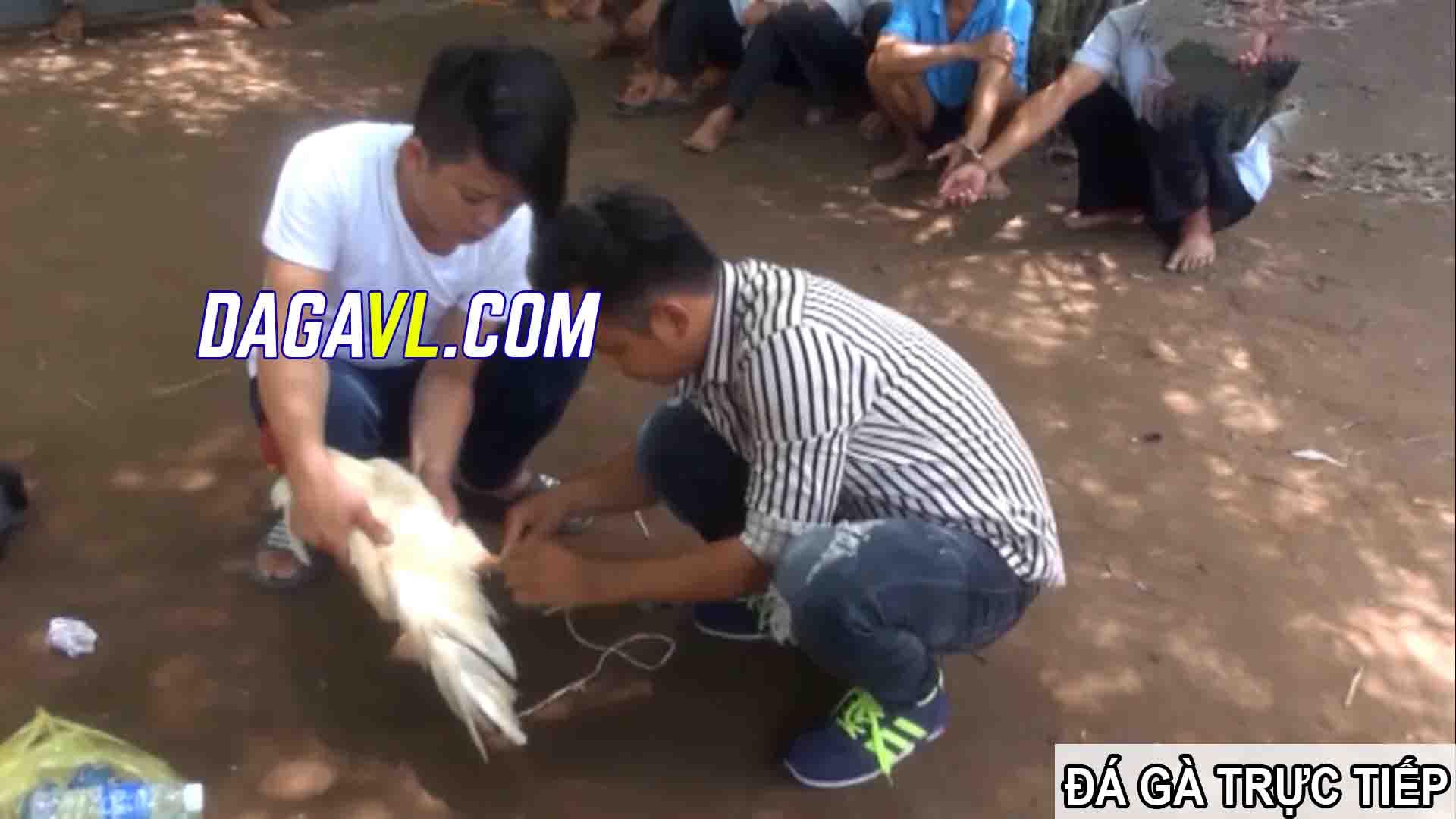 DAGAVL.COM - Đá gà trực tiếp - Bắt 21 đối tượng đá gà ăn tiền tại Vũng Liêm