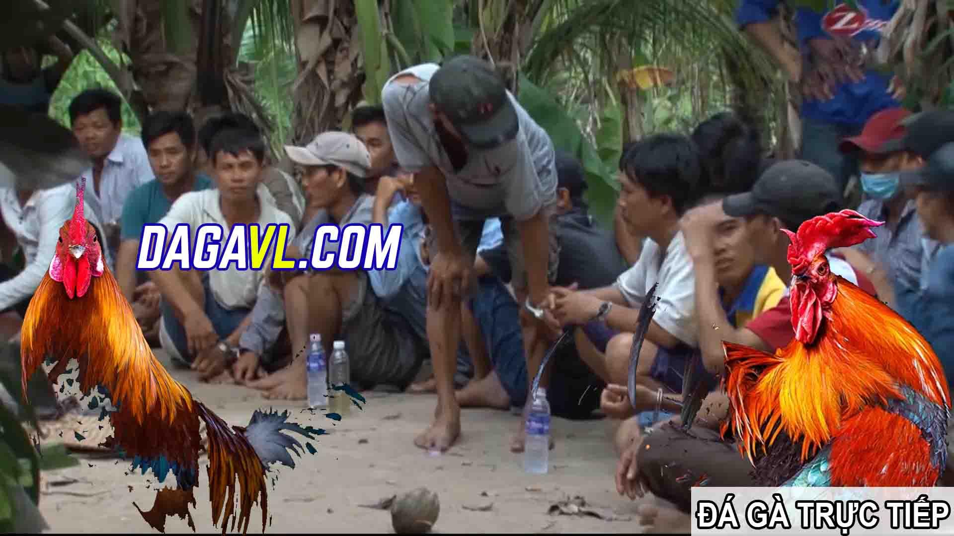 DAGAVL.COM - đá gà trực tiếp. Bắt 28 đối tượng đá gà ăn tiền tại Hòa Thành