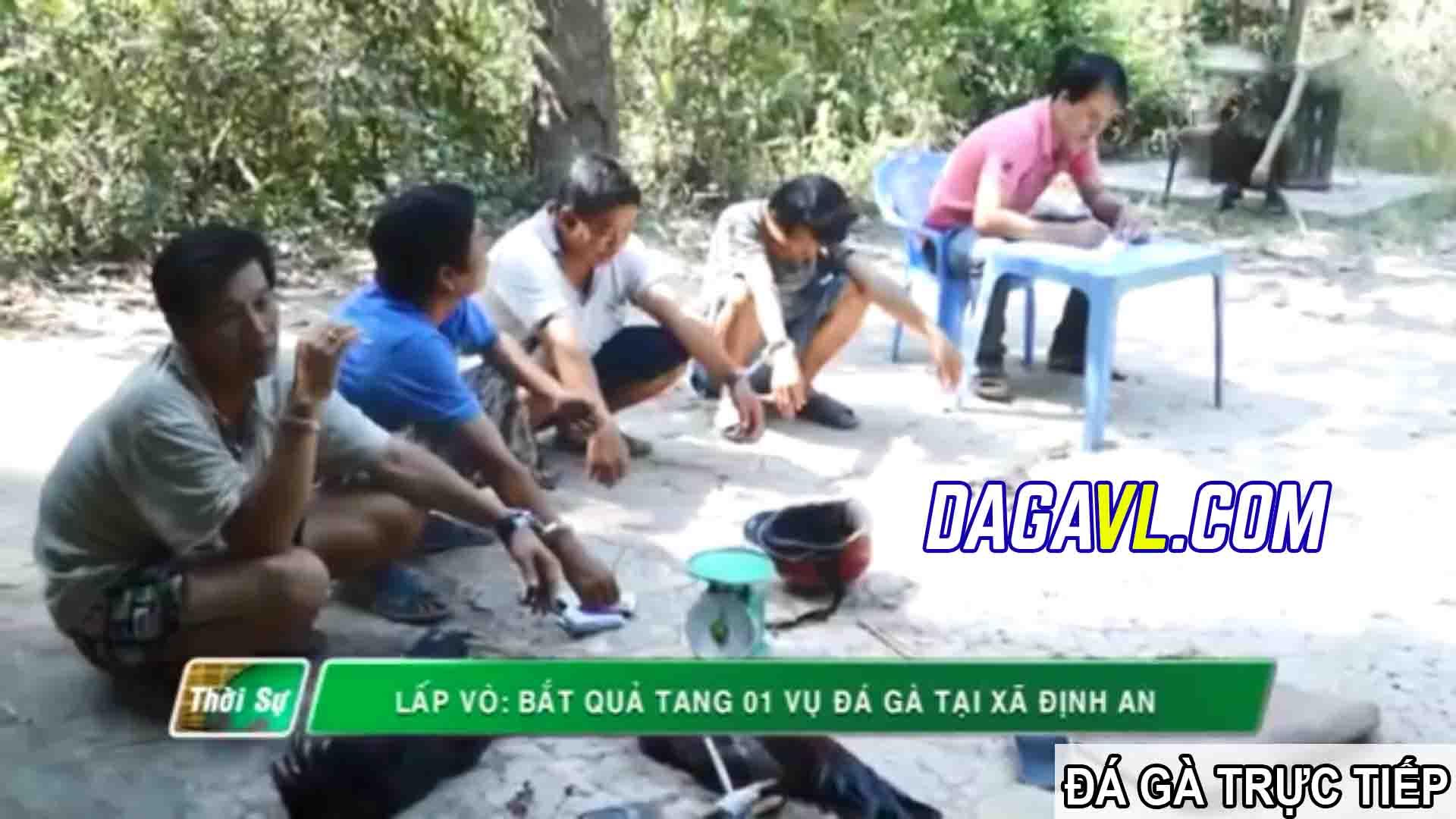 DAGAVL.COM - đá gà trực tiếp. Bắt 40 đối tượng đá gà ăn tiền tại Gò Công Đông