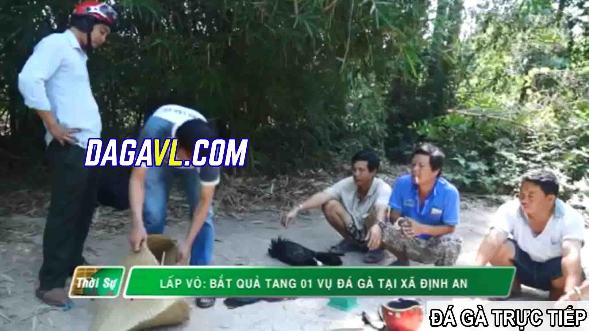 DAGAVL.COM - đá gà trực tiếp. Hiện trường bắt 40 đối tượng đá gà ăn tiền tại Gò Công Đông