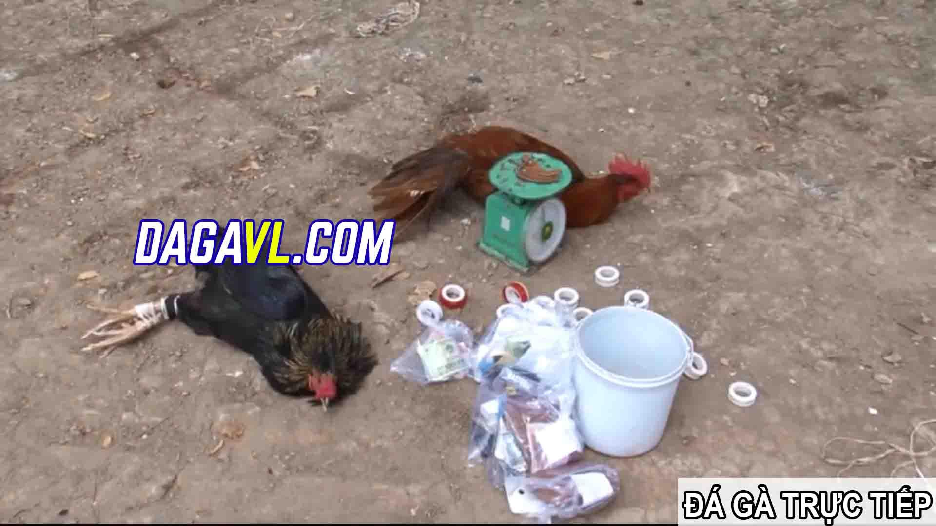 DAGAVL.COM - đá gà trực tiếp. Tang vật bắt 11 đối tượng đá gà ăn tiền tại Thới Châu