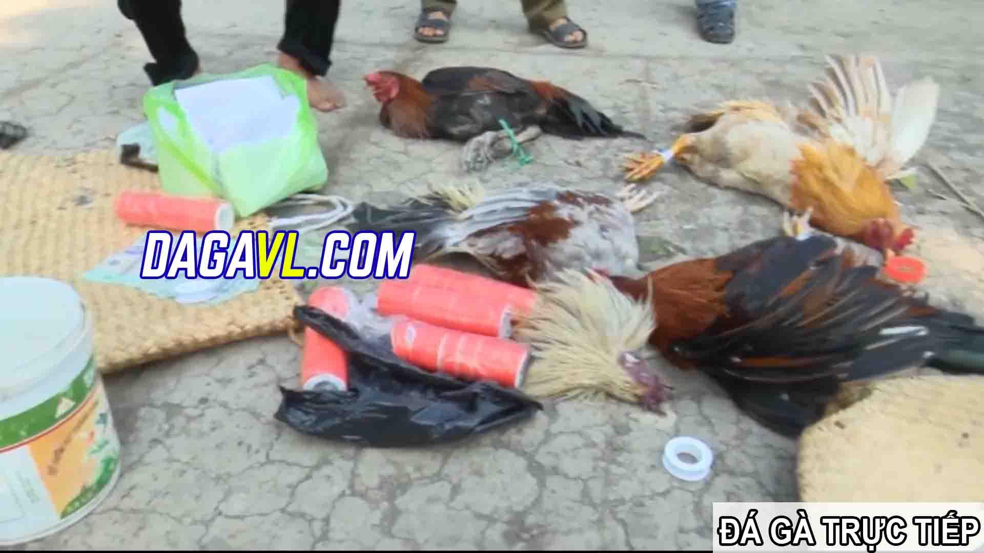 DAGAVL.COM - đá gà trực tiếp. Tang vật bắt 27 đối tượng đá gà ăn tiền tại Bà Rinh