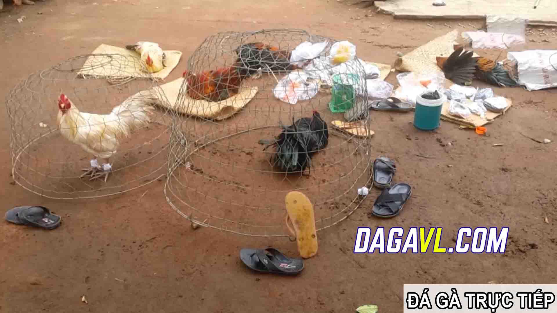 DAGAVL.COM - đá gà trực tiếp. Tang vật bắt 27 đối tượng đá gà ăn tiền tại Vị Thanh