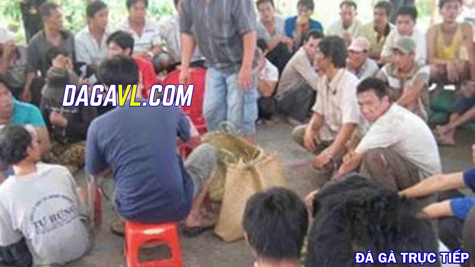 DAGAVL.COM - Bắt gần 100 đối tượng đá gà ăn tiền tại Tiền Giang