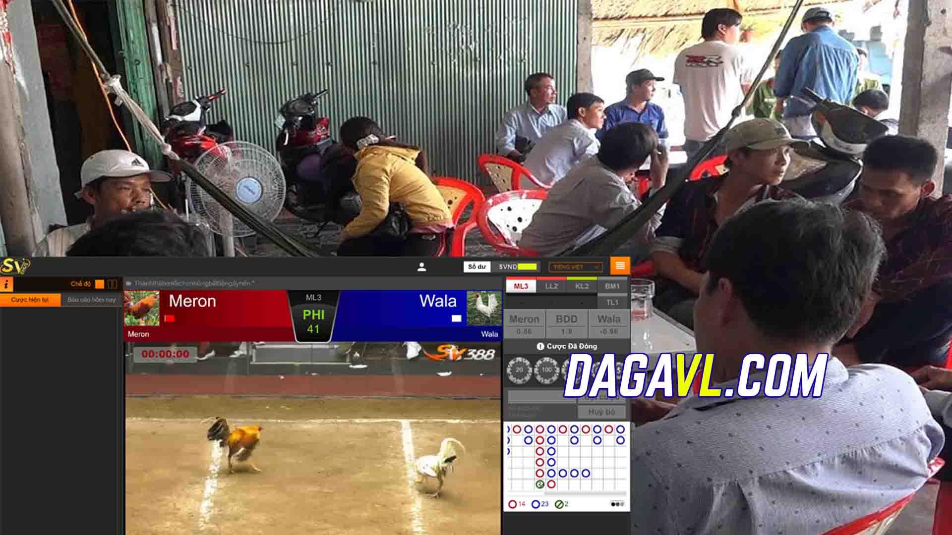 DAGAVL.COM - Bắt trường gà online ở Sài Gòn