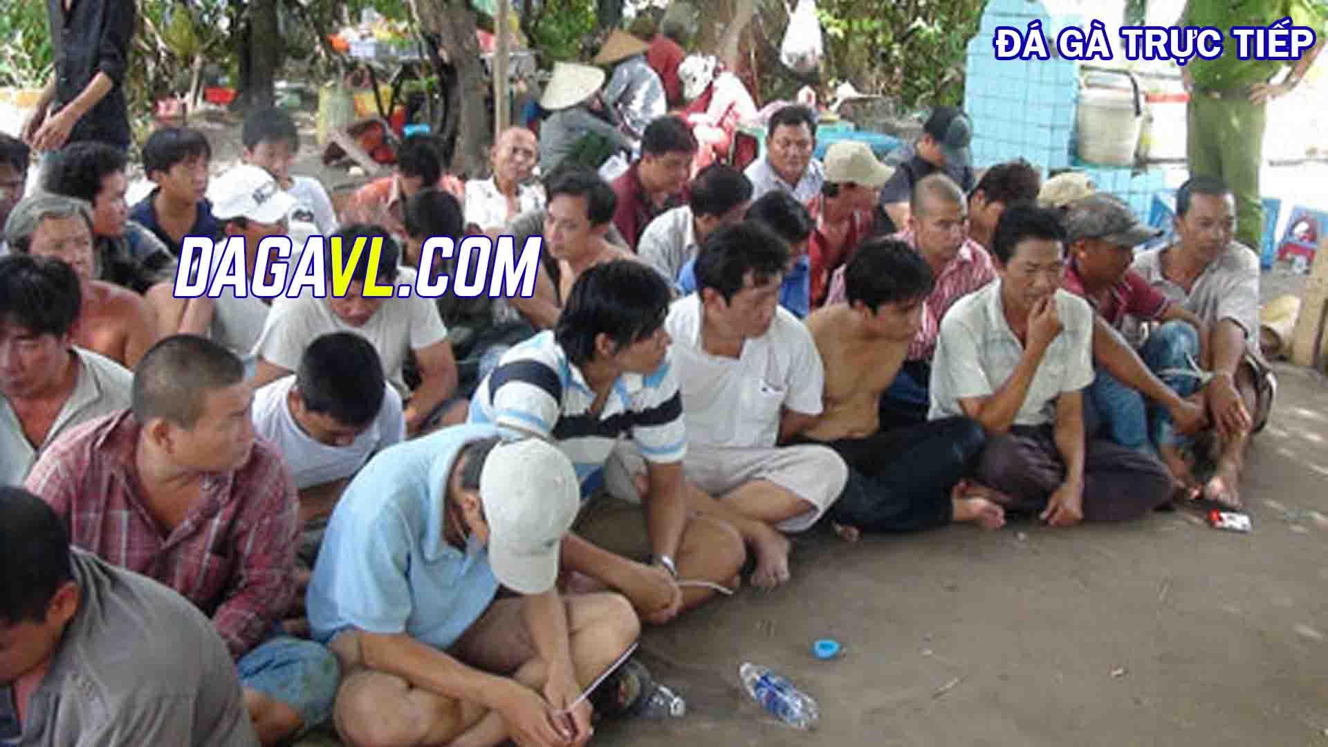 DAGAVL.COM - Các con bạc đá gà trực tiếp bị bắt tại hiện trường