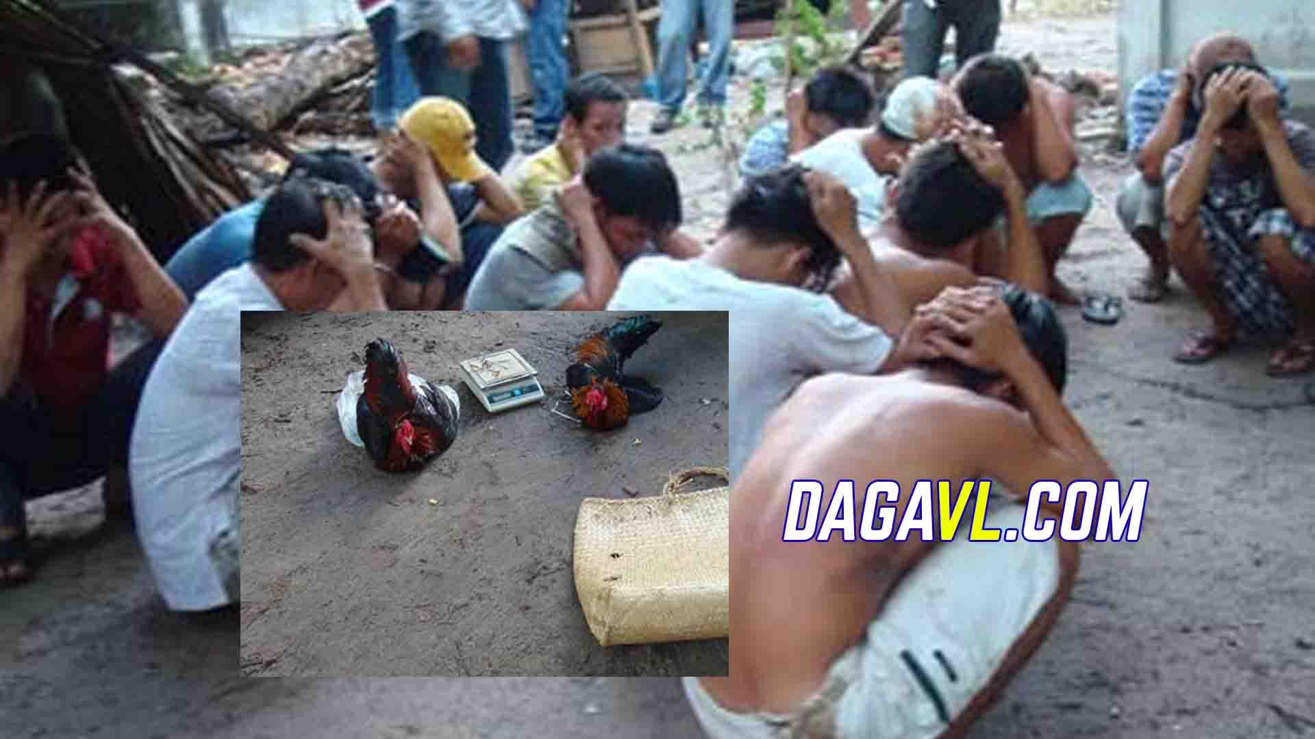 DAGAVL.COM - Cả nhà đá gà bị bắt vì đá gà