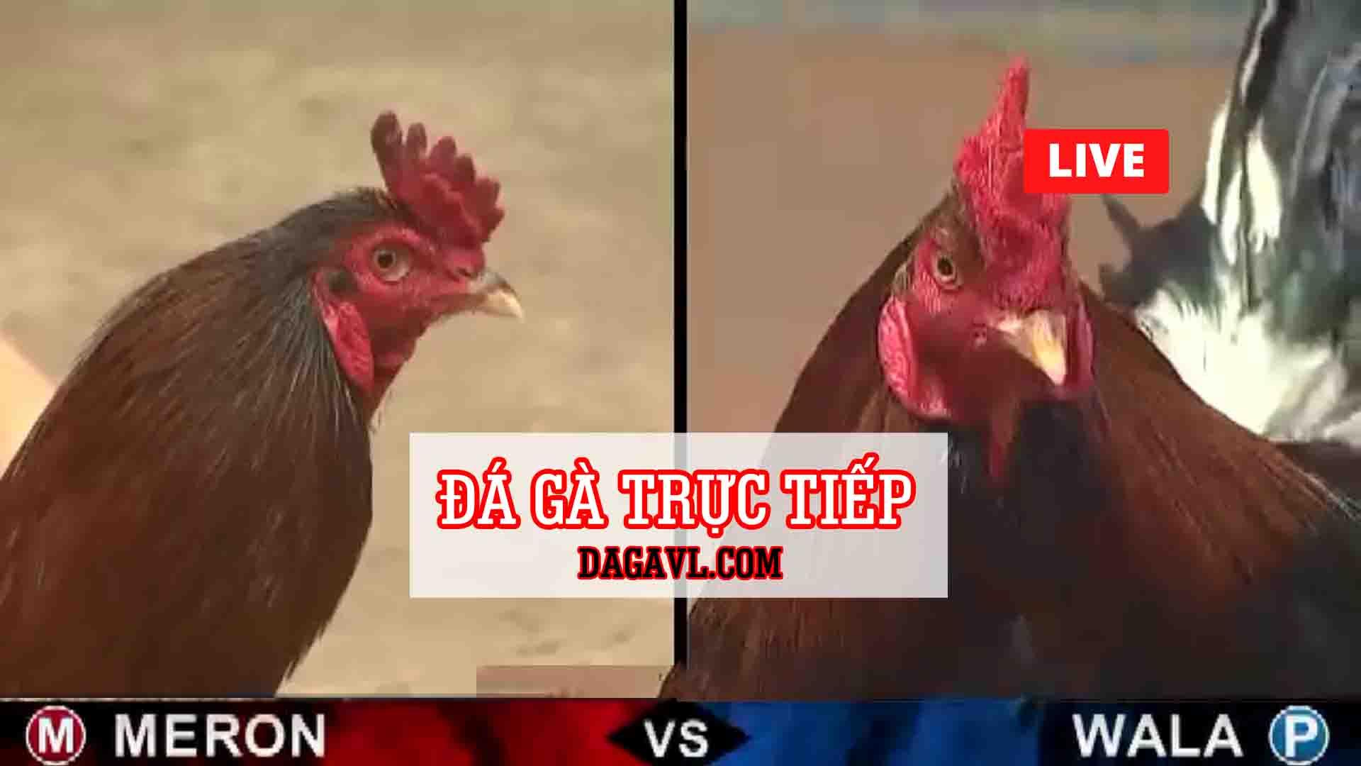 DAGAVL.COM - DAGATRUCTIEP - Đá gà trực tiếp thứ 4 ngày 29 tháng 7 năm 2020