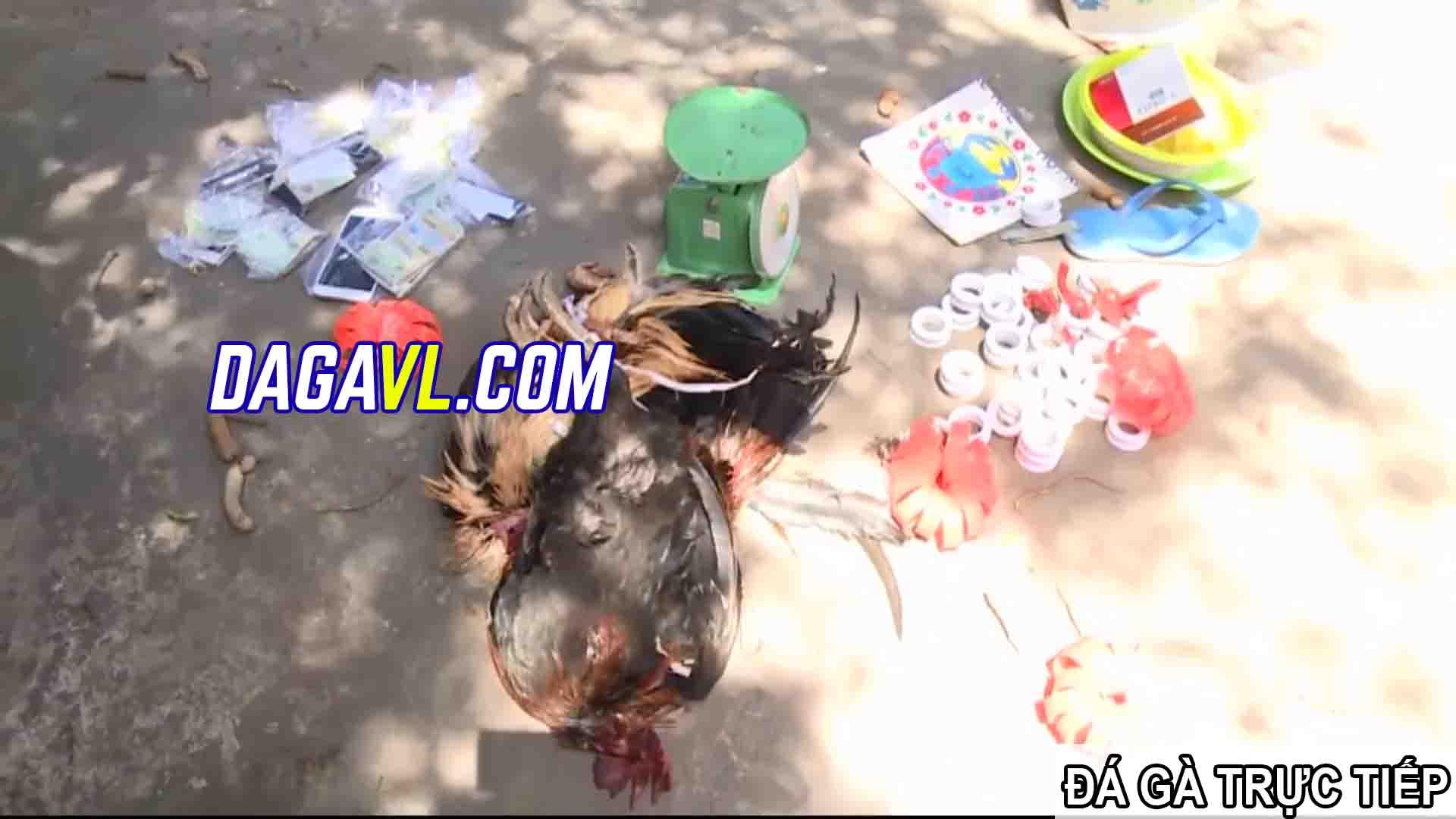 DAGAVL.COM - Tang vật bắt 10 đối tượng đá gà ăn tiền tại Thạnh Phú