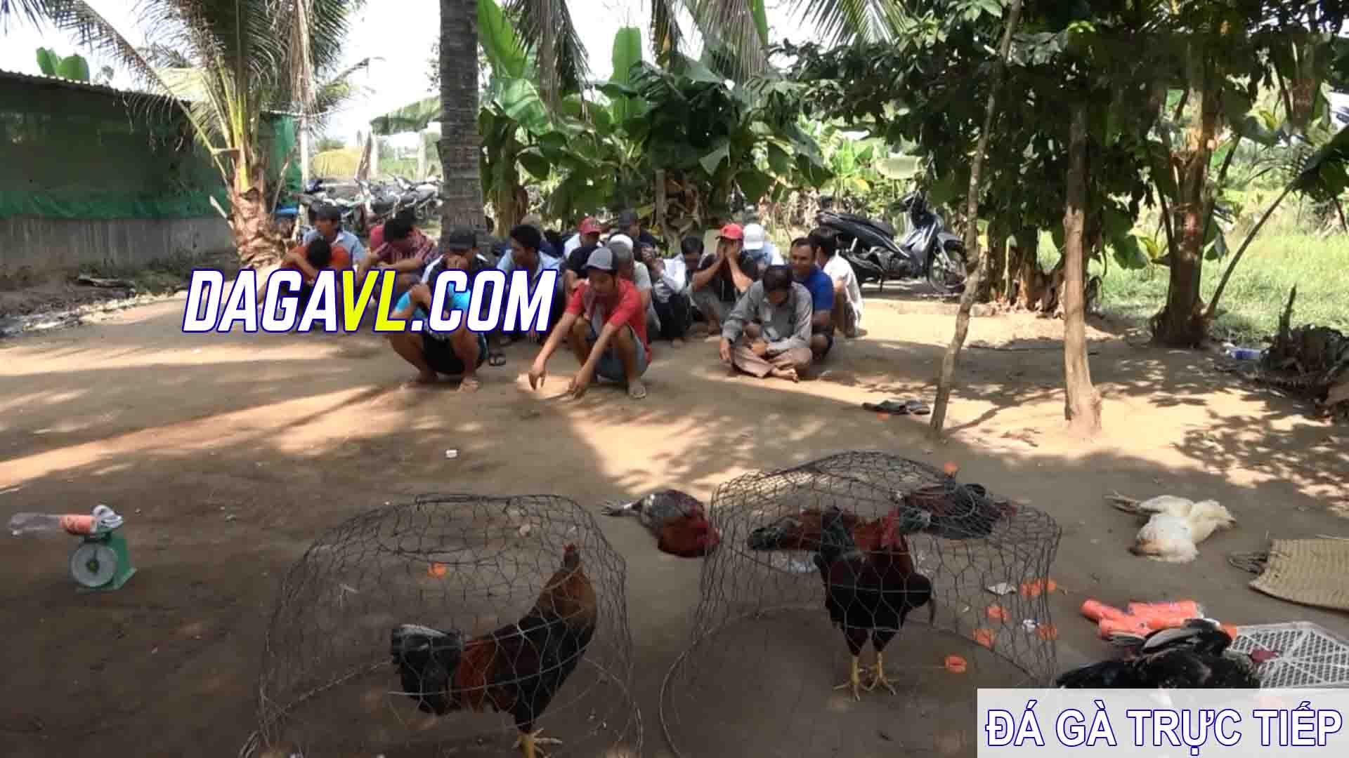 DAGAVL.COM - Triệt phá 2 tụ điểm đá gà ăn tiền tại Tiền Giang